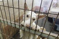 Muž z Mostu týral desítky zvířat: Výkaly prosakovaly k sousedům stropem