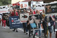 """""""Dost zabíjení planety a zvířat"""". Aktivisté zablokovali ulice a """"unesli"""" ovce z jatek"""
