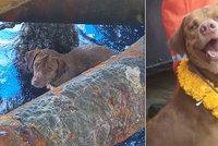 Vyčerpanou fenku zachránili 220 kilometrů od pevniny! Zachytila se na plošině uprostřed moře