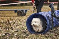 Den se štěkajícími chlupáči: Happy dog show nabídne výstavu psů i hry pro celou rodinu