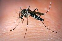 Obří komáří invaze na jihu Moravy! Hrozí smrtící západonilská horečka?
