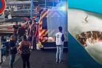 Žralok v dovolenkovém ráji utrhl surfaři (†33) nohu, tělo našli v přístavu. Kamarádi vyvázli