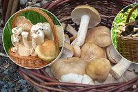 Rostou, hlásí houbaři. Plné koše májovek i první hřiby, mykolog slibuje žně