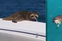 """""""Sbohem, s*áči!"""" Právník natočil, jak vyhodil mývala ze své lodi, teď se kaje"""