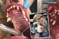 Šokující pohled: Adoptovaný pes měl v tlamě 70 zubů, veterinář viní nezodpovědného chovatele