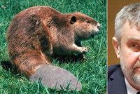 """Ministr zemědělství si uřízl ostudu: Mluvil o """"bobří ploutvi"""", měl ji za afrodiziakum"""