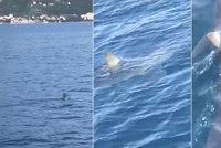 Žralok v Chorvatsku: Turista na Jadranu natočil jednoho z nejrychlejších predátorů
