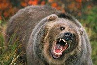 Na Čechy si v Tatrách počíhal medvěd: Muž se při útěku před ním zranil