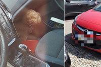 Češka nechala v Polsku péct psa v autě na slunci: Zachraňovat ho museli policisté