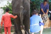 Slon psychopat, zmučený šimpanz, beton a řetězy! Zoo hrůzy šokovalo nejen turisty: Video dohání odborníky k slzám