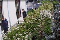 Lupiče nalákala otevřená brána: Zničili zámek, z pozemku v Benicích je vyhnal alarm. Poznáte je?