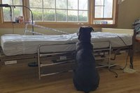 Dojemné foto: Pejsek čekal u smrtelné postele marně. Majitel už přijít nemohl