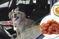 Nejen auto je pro psa v horku past! Víte, že ublížit můžete i ovocem?
