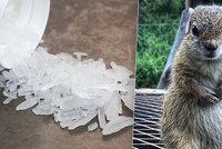 Muž krmil veverku pervitinem: Neuvěříte proč!