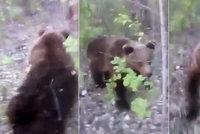 Magor pronásledoval medvěda do lesa a kopl ho: Zvíře se mu tvrdě pomstilo!