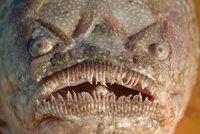 Tajemná ryba pokousala v dovolenkovém ráji děti (7 a 10). Rychlý predátor útočil během 30 minut