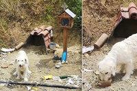 Pes čeká na svého páníčka (†40) už 18 měsíců na místě, kde ho srazil náklaďák