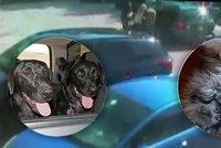 Tři pejsci zemřeli v rozpáleném autě: Hasiči i veterináři se je snažili marně zachránit