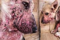 Utrpení štěňátka v romské osadě: Kvůli vážné kožní chorobě ho málem ubili k smrti
