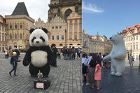 Obří zvířata na Staromáku: K pandě a lednímu medvědovi přibyla koala a krtek, v září ale mají skončit