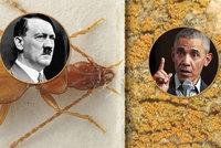 "Exoti světa: Brouk Hitler či Trumpova ""žížala"". Na pláži žije i Okamurova řasa"