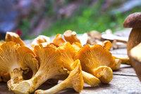 Kam na houby na Šumavě? Mykolog prozradil, kde hledat hřiby a kam na lišky s kosou