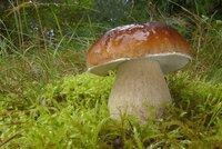 Na houby v Praze? Mykolog prozradil, odkud si přinesete ty nejlepší úlovky