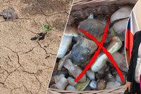 Houby ničí sucho, škody jdou do miliard. Vášnivý sběrač hřibů Brabec přiznal šok