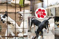 Petr chová 24 psů na malém pozemku s maringotkami. Obvinění z týrání se brání