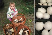 Česko se proměnilo v ráj houbařů: Co den, to tři koše!