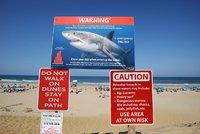 Na 60 pláží nesmí turisté, lidožraví žraloci terorizují americké pobřeží