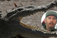 Krokodýl, který kdysi patřil Fidelu Castrovi, pokousal muže na večírku v akváriu