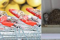 Jiřičky se usídlily pod střechou supermarketu: Pokálené vozíky jsou problém!