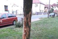 Lidská hloupost nezná mezí: Ohoblovaný jasan v Horních Počernicích je na odpis