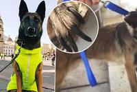 Fenka Zoe umírala strašlivou smrtí. Vysloužilí psí hrdinové končí v šílených podmínkách