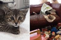 Mladíci zmizeli a kočky nechali napospas osudu. Hladová zvířata se požírala navzájem