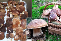 Houbařské žně v Česku nekončí, mykolog přidal dobrou zprávu. Jak dlouho ještě porostou?