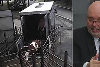 Děsivé video kopání do krav: Šlo o chyby jednotlivců, říká šéf jatek. Ministr zuří