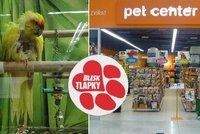 """""""Oškubaný"""" papoušek i mrtvé ryby: Pet Center čelí stížnostem, obchod se brání"""