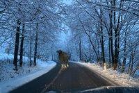 V Česku napadne až 10 centimetrů sněhu. Sledujte radar, pozor na velbloudy i náledí