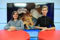 Vysílali jsme: Povinné čipování psů od ledna. Bude účinné proti množírnám?