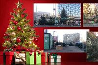 Stánkaři v Praze začali prodávat vánoční stromky: Kde a za kolik je koupíte?