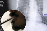Nová studie děsí kuřáky e-cigaret: Mají ničivé účinky na plíce! Odborníci řekli, jak to skutečně je