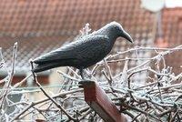 Do Česka nakoukne zima, teploty spadnou hluboko pod nulu. Experti přidali varování