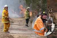 """Utrpení zvířat v plamenech: """"Na podzim složíme smutný účet,"""" říká o požárech expert"""