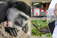 Do Zoo Praha chodí méně návštěvníků než loni. Schází hlavně zahraniční turisté