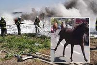 Masivní požár zahalil metropoli kouřem: Koně šílení děsem se řítili mezi houkajícími cisternami a auty