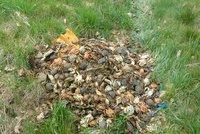 Krabí apokalypsa! Do škarpy v Praze 4 někdo hodil 700 živočichů, všichni uhynuli