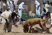 Turci z Německa množí psy na zápasy: Nepotřebné vozí do Čech, kde se jich zbavují!
