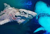 Žraločice brutálně trhá lidi na krvavé cáry! Recenze Maneater